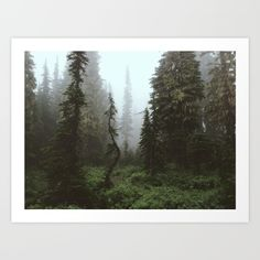 Mt Rainier National Forest, Washington<br/> spooky, tree, crooked, washington, fog, dark, forest