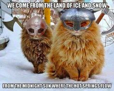 Haha  Feline marauders! Love the Zep reference.