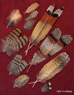 feathers for tying full dressed salmon flies Feather Painting, Feather Art, Blue Feather, Turkey Feathers, Bird Feathers, Dream Catcher Art, Fly Tying Materials, Salmon Flies, Feather Crafts