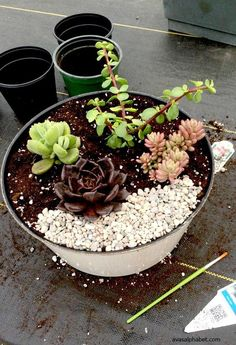 4 Secrets for Successful Succulents | gardening #InspirationSpotlight