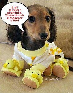 BOA NOITE A TODOS! <3 #petmeupet #cachorro #filhode4patas #maedepet