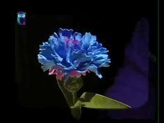 Делаем цветок-василек из фоамирана (пористой резины). Мастер класс. Обсуждение на LiveInternet - Российский Сервис Онлайн-Дневников