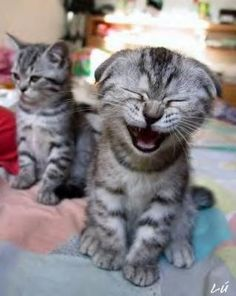 Laughing out loud cat