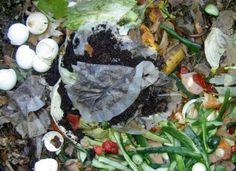 Los restos del té, ya sean bolsas u hojas, los puedes usar en tu jardín para diversos fines. Con estos 7 usos de las bolsas de té en el jardín podrás hacerte una idea clara de sus propiedades.Las …