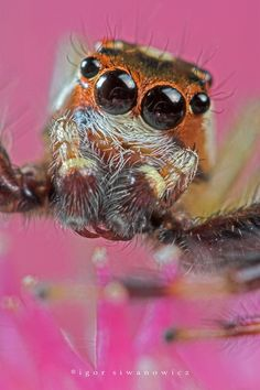 I really like this photo because it is so detailed. All the tiny hairs are visible. The shape of the eyes are also really defined and I like that the reflection in the eyes has been captured. I also like how large the spider is compared to real life which is what macro photography is all about.