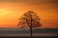 morning glory | Flickr - Photo Sharing!