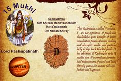 Benefits of fifteen Mukhi: God : Lord Pashupatinath / Planet : Jupiter  This Rudraksha is called 'Pashupati'. As per experience of people this Rudraksha gives benefits of better visualization power, decision making and also gives wealth and particularly brings back blocked funds. It has all virtues of Rudraksha up to 14 Mukhi also. http://www.rudralife.com/Rudraksha/details.php?id=21