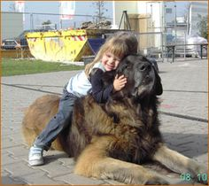 Enough love for me! Leonberger love