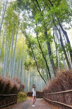 See all the main attractions wiith this comprehensive Kyoto 2 day itinerary. Includes where you should stay and what buses and trains you need to take. Kyoto Travel Guide, Travel Guides, Kyoto Itinerary, Buses And Trains, Main Attraction, Tourist Spots, Where To Go, Bamboo, Places To Visit