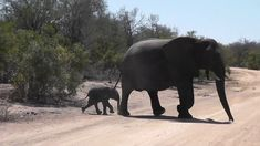 The cutest little baby elephants ran across the road to stay with the family on their way to drink water. Videos taken on my visits to Kruger National Park . Cute Little Baby, Little Babies, Kruger National Park, National Parks, Baby Elephants, Drinking Water, South Africa, Families, Pets