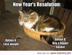 Funny new year resolutions - New Year Meme, Quotes About New Year, Year Quotes, Fat Cats, Cats And Kittens, Ragdoll Cats, Crazy Cat Lady, Crazy Cats, New Years Resolution Funny