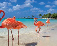 ARUBA-2016-Caribe Viajes y Congresos