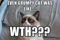 wth cat images