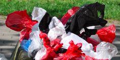Hunde und Plastikmüll