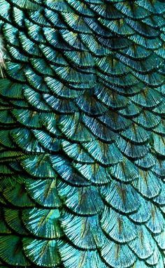 Aqua metallic peacock design