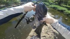 How to catch catfish in a river. Fishing creeks for catfish. To see my bank fishing hacks video check out To see my overnight bank fishing trip – bank fishing for catfish so… Trout Fishing Tips, Catfish Fishing, Fishing Lures, Catfish And Carp, How To Catch Catfish, Fishing Techniques, Best Fishing, Bait, River