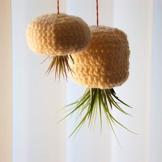 Two Air Plants Hanging in Crochet Bulb Pineapple by TheLeiStand