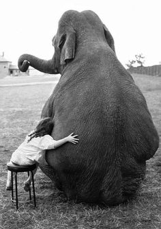 Images That Will Make You Feel Genuinely Good - My Greatest Friend 1986 Copyright of John Drysdale The girl grew up with the elephant and they - Vintage Photography, Animal Photography, Beautiful Creatures, Animals Beautiful, Animals Images, Cute Animals, Elephant Love, Great Friends, Belle Photo
