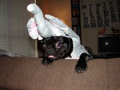 """I'M AN ELEPHANT NOW AND NOBODY CARES."""