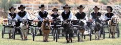Petite Elite of Phoenix Arizona, mini driving team.