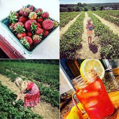 My kids are full of surprises and strawberries (& a kick ass strawberry lemonade recipe) — The Landscaper's Wife Strawberry Picking, Strawberry Lemonade, Mom Blogs, Kicks, Cocktails, Landscape, Fruit, How To Make, Recipes