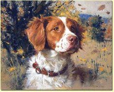 Turning around the West - Vigo (Galicia - Spain) Hunting Art, Hunting Dogs, Brittney Spaniel, Brittany Spaniel Dogs, Brittany Puppies, Vintage Dog, Dog Paintings, Wildlife Art, Dog Portraits