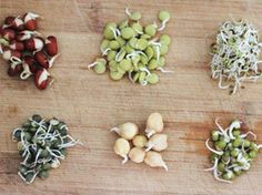 Instructions for sprouting lentils/beans, to make them more digestible. I suggest cooking them lightly (steam, stir fry) before eating because apparently they have something in them to stop animals eating them... better if cooked.