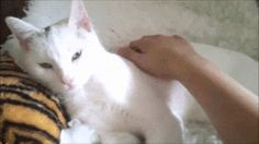 http://www.lovemeow.com/minki-the-cat-stray-no-more-this-will-touch-your-heart-1608424746.html