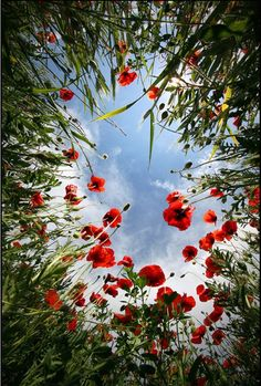 Blue sky peeking through red buds and greenery. Perhaps this is what a bug sees when it looks up . . .? via @photodoto