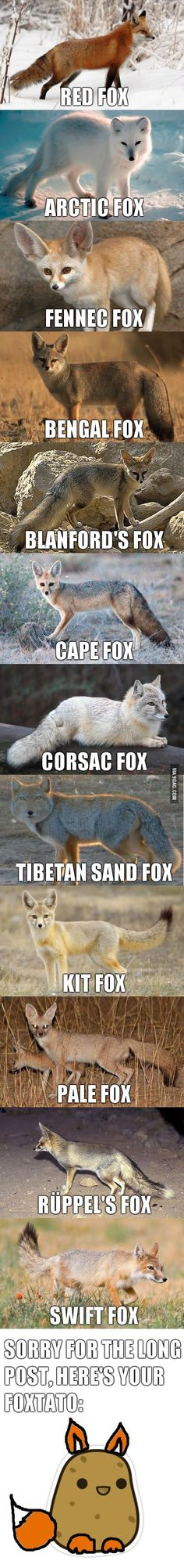 Nature Animals Fennec Fox Ideas For 2019 Cute Funny Animals, Cute Baby Animals, Nature Animals, Animals And Pets, Strange Animals, Beautiful Creatures, Animals Beautiful, Cute Fox, Animal Memes