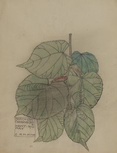 Charles Rennie Mackintosh - Beech Leaf, 1910