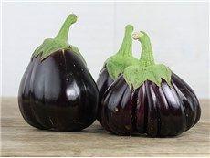 Black Beauty Eggplant - Mar 15
