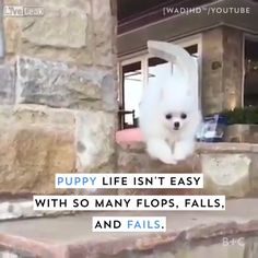 Watch this video for some hilariously adorable puppy fails. Watch this video for some hilariously adorable puppy fails. Funny Animal Memes, Dog Memes, Cute Funny Animals, Funny Animal Pictures, Cute Baby Animals, Funny Cute, Funny Dogs, Funny Puppies, Animal Quotes