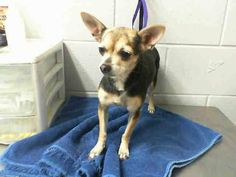 RESCUED! #A473933 Release date 10/14 Intake date: 10/7 Female, 5 years (1 in family of 9)...  City of San Bernardino Animal Control-Shelter. https://www.facebook.com/photo.php?fbid=10203708730136340&set=a.10203202186593068&type=3&theater