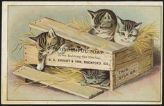 Cats & Vintage Trade Cards - Playful Kitty