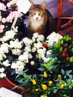 O gato da floricultura