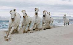 Bild von weissen pferde am strand