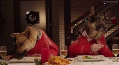 PROVO, Utah -- Six animals from the Humane Society of Utah were featured in a new Freshpet commercial, which features a holiday dinner with all of the expected personas--but each is played by a cat...