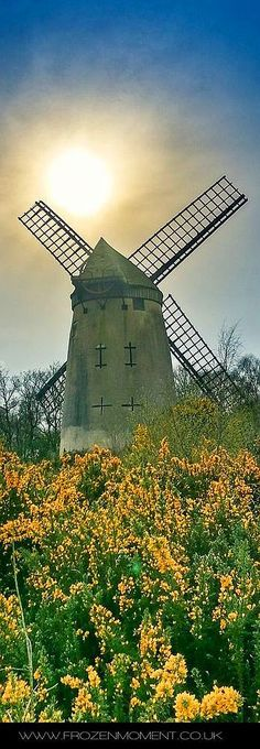 The Bidston Windmill #by Chris Jones -- 500px.com #sunset mill nature spring flowers yellow sky blue landscape