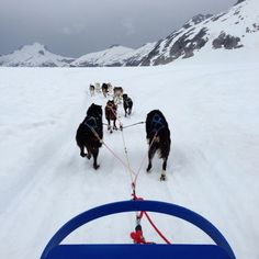 Disney Cruise Line Alaska Dog Sled Excursions: Compare/Contrast