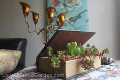 Cacti in book planter