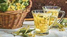 benefícios das plantas medicinais