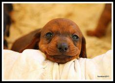"You had me at ""hello""...   Flickr - Photo Sharing!"