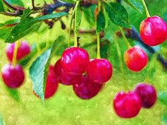 I uploaded new artwork to fineartamerica.com! - 'Fresh Cherries On The Tree' - http://fineartamerica.com/featured/fresh-cherries-on-the-tree-lanjee-chee.html via @fineartamerica