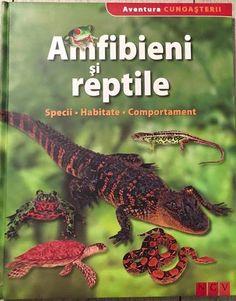 Amfibieni si reptile - Aventura cunoasterii; Varsta: 6+; Cat sunt de periculosi crocodilii si serpii? Cum se reproduc salamandrele, broastele si saurienii? Aceasta enciclopedie ne ofera raspunsuri. Peste 4400 de specii cunoscute de amfibieni populeaza intreaga planeta, iar reptilele sunt diferentiate in peste 6000 de specii. Speciile prezentate in aceasta carte sunt descrise pe larg: denumire stiintifica, morfologie, hrana, mod de reproducere si habitat. Children Books, Reptiles, Animals, Children's Books, Animales, Animaux, Animal, Animais, Baby Books
