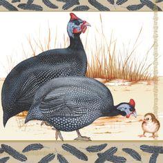 20 napkins - 33 x 33 cm GUINEA FOWL,  Animals - chicken / cock,  Everyday,  lunchnapkins,  Guinea fowl