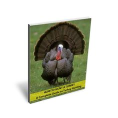 How to Hunt Turkey - a Complete Guide to Turkey Hunting