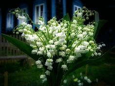 Будьте осторожны: цветы-убийцы  http://econet.ru/