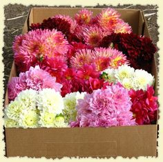 A box of wedding bouquets with Dahlias (the perfect fall wedding flower!)