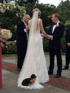 Puppy sitting at the wedding dress